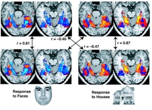 brain imaging activity NIH 2