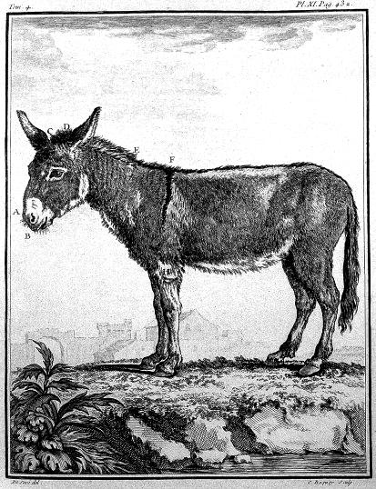 Donkey Histoire_naturelle_des_minéraux