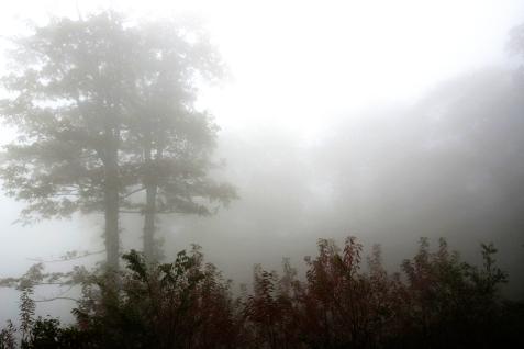 foggy-1754396_1920