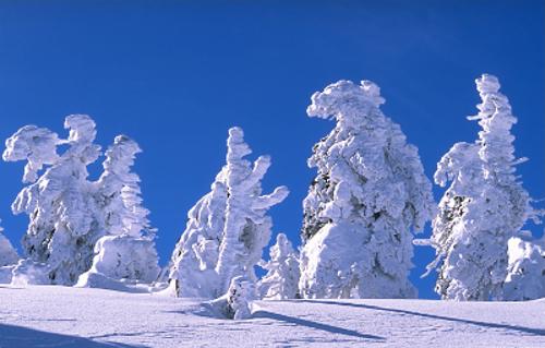 snow-brockensnowedtrees