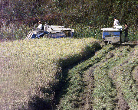 South Koreans_harvest_rice_in_the_Demilitarized_Zone_of_Korea,_1988