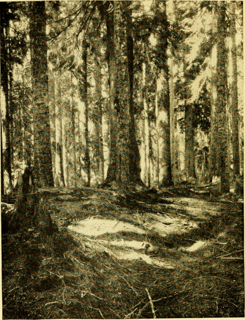 The_book_of_camping_and_woodcraft;_a_guidebook_for_those_who_travel_in_the_wilderness_(1910)_(14779892741)