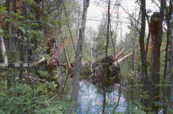Swamp public